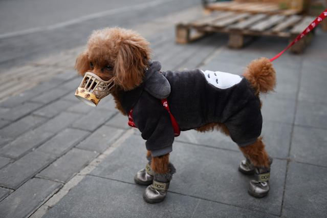 A dog wears a home made cover over its snout, which its owner said was a preventive measure against the COVID-19 coronavirus in Beijing. (Getty Images)
