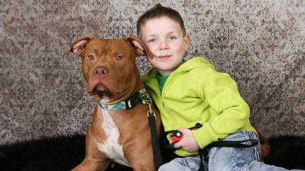 Rescued Pit Bull Rescues 4-Year-Old Minnesota Boy -