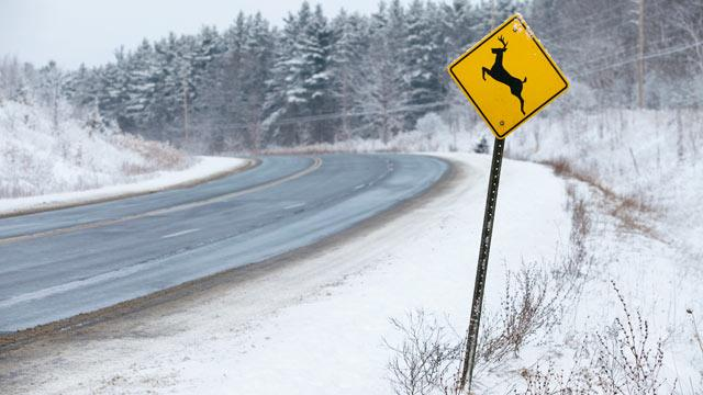 Bill Would Legalize Roadkill Dining