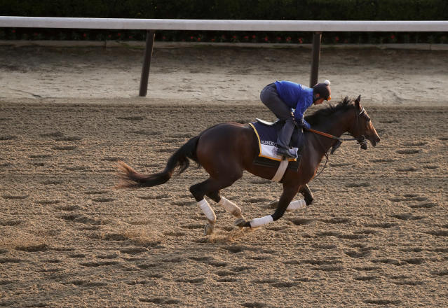 Belmont Stakes hopeful Blended Citizen works out on the main track at Belmont Park, Friday, June 8, 2018, in Elmont, N.Y. Blended Citizen is one of 10 horses racing in the 150th running of the Belmont Stakes horse race on Saturday. (AP Photo/Julie Jacobson)
