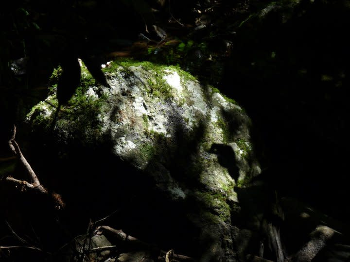 The frost chars the grass but only a few metres away, I chance upon a moss-covered rock that leads me into a dense, dark evergreen forest where the air is uniformly, pleasantly cool and humid.