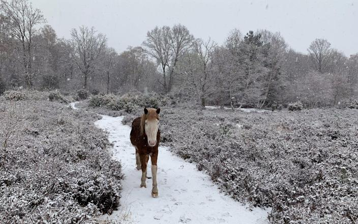 Wintry conditions in Thames Basin Heaths near Woking - PA