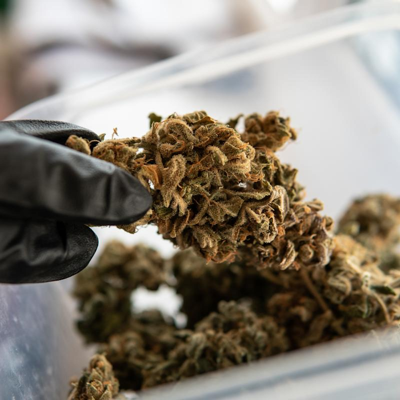 CannTrust has halted all shipments as it awaits a response from regulators that could see the company's license suspended or revoked. (Getty)