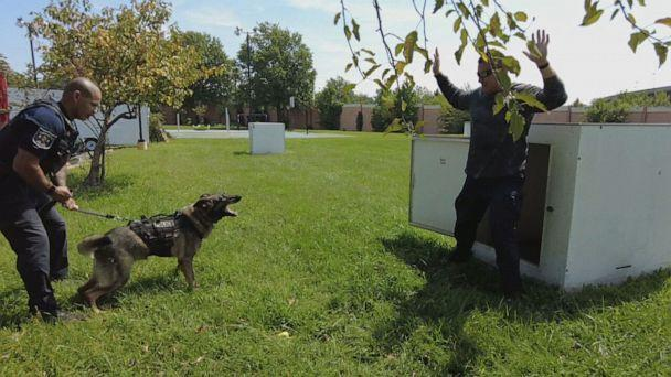 PHOTO: Sgt. Kyle Russell of Alexandria, Virginia's police department, training his K-9 partner Taz. (ABC)