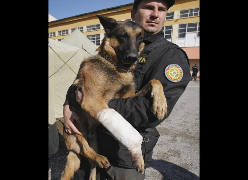 Roman Akisen carries Cip, a 5-year-old German shepherd who found 18-year-old Imdat Padak alive under the rubble of a collapsed building more than 100 hours after a magnitude 7.2 quake, in Ercis, Turkey, Oct. 28, 2011.