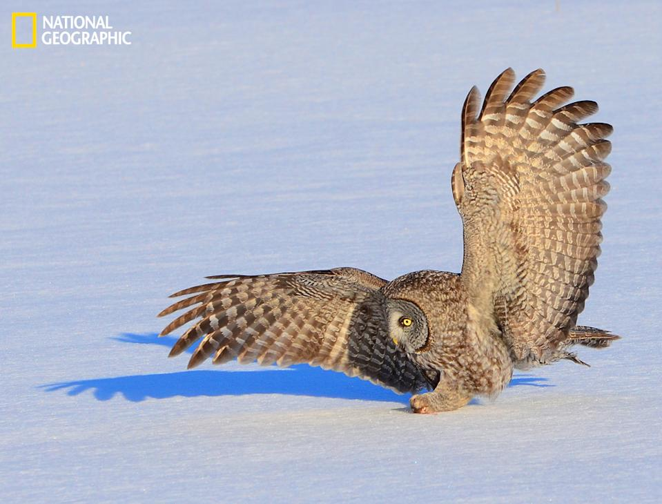 "Touchdown. (Photo and caption Courtesy Raymond Pregent / National Geographic Your Shot) <br> <br> <a href=""http://ngm.nationalgeographic.com/your-shot/weekly-wrapper"" rel=""nofollow noopener"" target=""_blank"" data-ylk=""slk:Click here"" class=""link rapid-noclick-resp"">Click here</a> for more photos from National Geographic Your Shot."