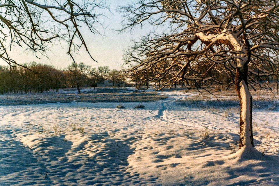 A rare snow in the oak woodlands of northern Texas.