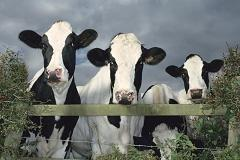 Where's the beef? Industry at crossroads