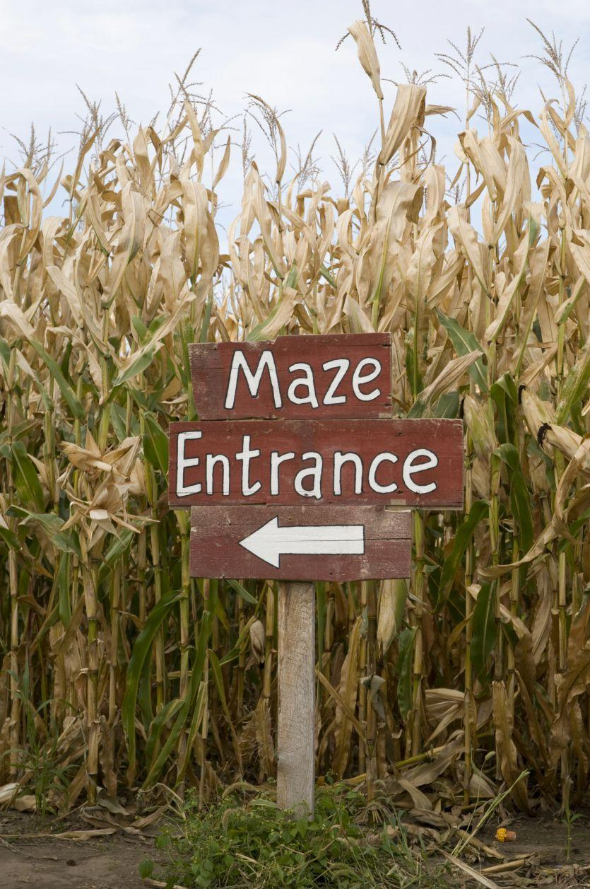 "<p>With all the twists and turns, this outdoor fall activity is perfect for social distancing. The more challenging the course, the better! Find a <a href=""https://www.countryliving.com/life/travel/g22717241/corn-maze-near-me/"" rel=""nofollow noopener"" target=""_blank"" data-ylk=""slk:corn maze near you"" class=""link rapid-noclick-resp"">corn maze near you</a>.</p>"