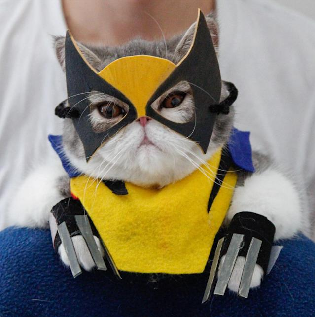 <p>Snoopy wearing a Wolverine costume. Shirley insists that, despite their rather grumpy expression, the cats are happiest when getting into their favorite costumes. (Photo: DailySnoopy/Caters News) </p>