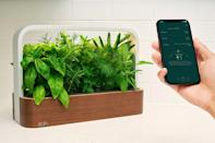 """<p>If you or someone you love doesn't exactly have a green thumb (no one judges you for killing that """"easy to maintain"""" succulent), consider the Wi-Fi powered <a href=""""https://www.edntech.com/collections/gardens/products/smallgarden"""" rel=""""nofollow noopener"""" target=""""_blank"""" data-ylk=""""slk:SmallGarden"""" class=""""link rapid-noclick-resp"""">SmallGarden</a>. Thanks to an app that helps to regulate water and light, your fresh herbs, greens, and flowers are guaranteed to grow and thrive all year-round.</p> <p><strong>$199.95, <a href=""""https://www.edntech.com/collections/gardens/products/smallgarden"""" rel=""""nofollow noopener"""" target=""""_blank"""" data-ylk=""""slk:edntech.com"""" class=""""link rapid-noclick-resp"""">edntech.com</a></strong></p> <p><strong>*Use discount code BETTERTHANROSES for free shipping</strong></p>"""