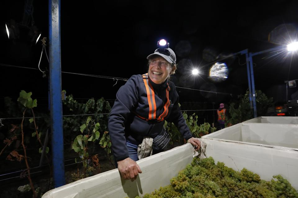 """Kathy Joseph harvests Chardonnay grapes along with the crew in Lompoc. <span class=""""copyright"""">(Carolyn Cole / Los Angeles Times)</span>"""