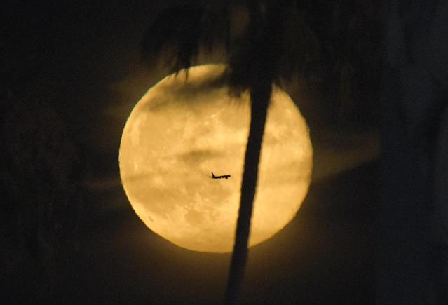 A plane flies pasts a supermoon as a palm tree grows in the foreground during a baseball game between the Los Angeles Dodgers and the San Diego Padres at Dodger Stadium, Saturday, July 12, 2014, in Los Angeles. (AP Photo/Mark J. Terrill)