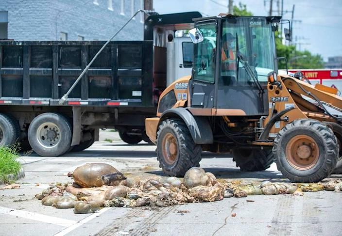 Sanitation crews were sent to clean up a pile of animal remains that were dumped in the middle of a New Orleans roadway on Thursday, June 24, 2021.