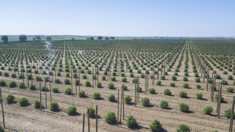 Tilray® Increases International Export Capacity With New Outdoor Cultivation Site in Portugal