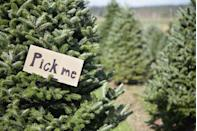 """<p><strong>Sussex, New Jersey</strong> (Starting November 30)</p><p>If you're famished after a day of locating the ultimate Christmas tree at <strong><a href=""""http://www.njchristmastrees.com/"""" rel=""""nofollow noopener"""" target=""""_blank"""" data-ylk=""""slk:Shale Hills Farm"""" class=""""link rapid-noclick-resp"""">Shale Hills Farm</a></strong>, Mrs. Claus is selling everything from jumbo-size pretzels to freshly brewed cider. Grab your concessions and head over to the Christmas Movie Theater, where you can sit back and watch a classic. <br></p>"""