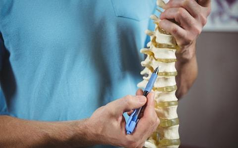 Humans cannot regenerate their spinal cord and will lose movement below an injury  - Credit: Alamy