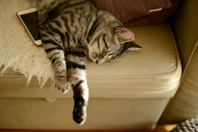 A cat sleeping on a sofa with a mobile phone by its side.