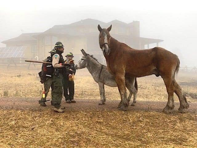 Adam and Ennis safe after a successful escape from the CalWood fire. (Photo: Photo courtesy of Boulder County Parks and Open Space)
