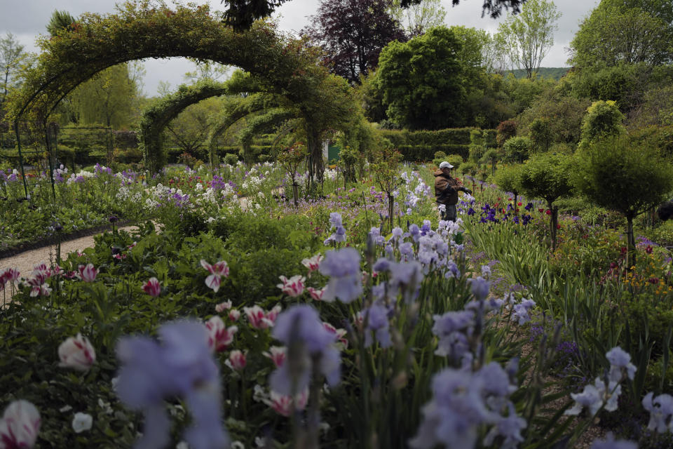 A gardener works in the Japanese-inspired water garden of Claude Monet's house, French impressionist painter who lived from 1883 to 1926, ahead of the re-opening, in Giverny, west of Paris, Monday May 17, 2021. Lucky visitors who'll be allowed back into Claude Monet's house and gardens for the first time in over six months from Wednesday will be treated to a riot of color, with tulips, peonies, forget-me-nots and an array of other flowers all competing for attention. (AP Photo/Francois Mori)