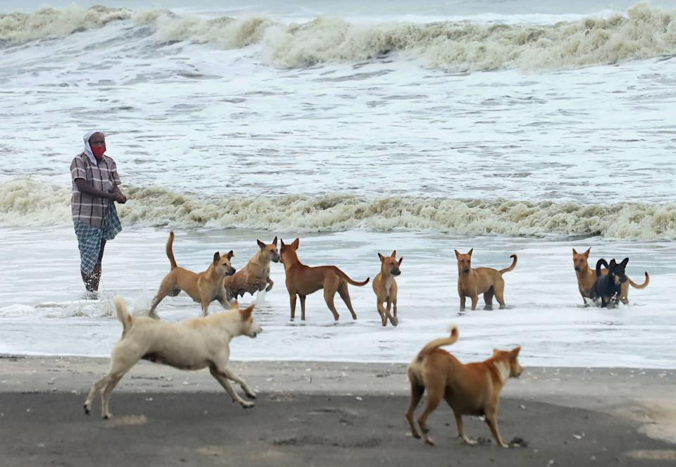 A man feeds dogs during the formation of cyclone Tauktae, at a beach in Kozhikode