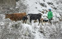 Ethnic Armenians are rushing to bring livestock and belongings out of regions of Nagorno-Karabakh ceded to Azerbaijan