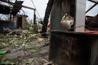 <p>A chicken seen in the house damaged by Typhoon Nepartak on July 9, 2016 in Taitung, Taiwan. (Photo: Billy H.C. Kwok/Getty Images) </p>
