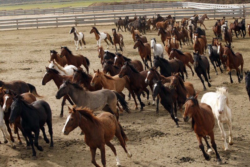 Fertility drugs, nature better than horse roundups