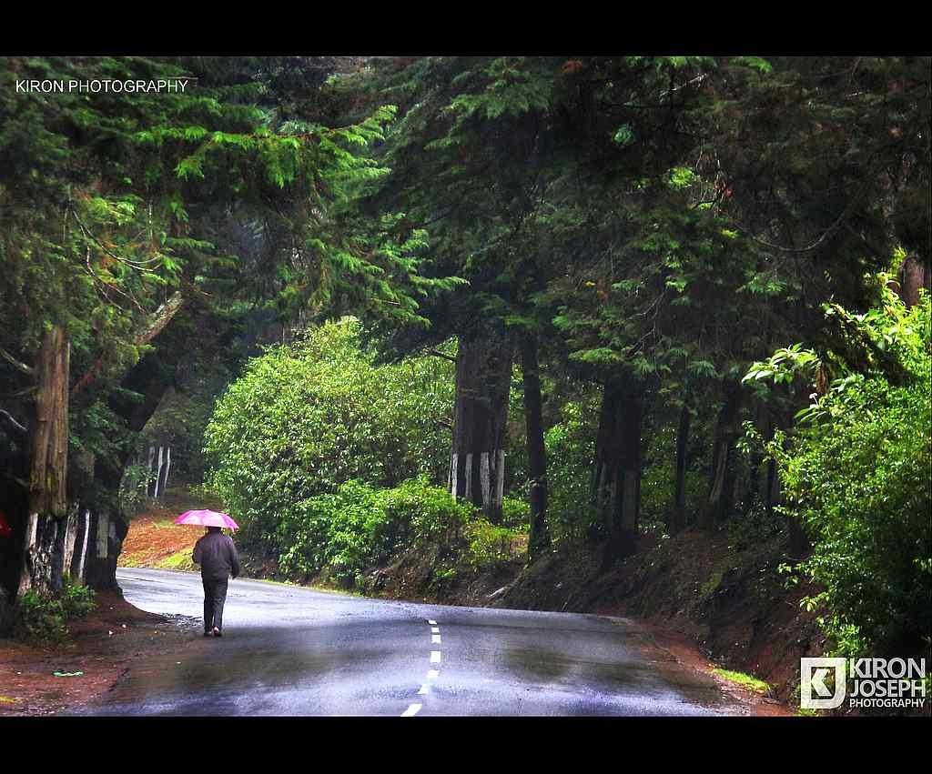 "A walk in the rain <br>By <a target=""_blank"" href=""http://www.flickr.com/photos/83427070@N07/"">Kiron Joseph Photography</a>"