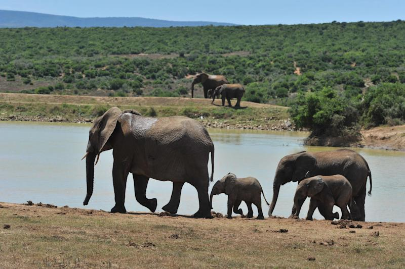 Poaching has risen sharply across Africa in recent years fuelled by rising demand in Asia for ivory and rhino horn, coveted as a traditional medicine and a status symbol