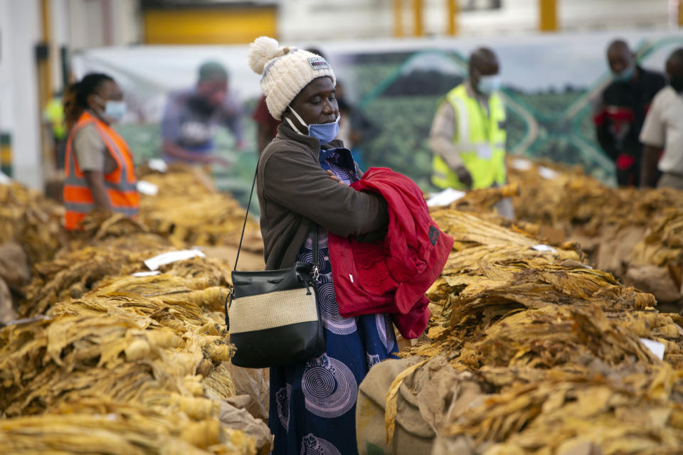"""A tobacco grower waits patiently for her tobacco crop to be sold at the auction floor in Harare, Thursday, April 8, 2021. Zimbabwe's tobacco is flourishing again. And so are the auctions where merchants are fetching premium prices for the """"golden leaf"""" that is exported around the world. Many of the small-scale farmers complain they are being impoverished by middlemen merchants who are luring them into a debt trap. (AP Photo/Tsvangirayi Mukwazhi)"""