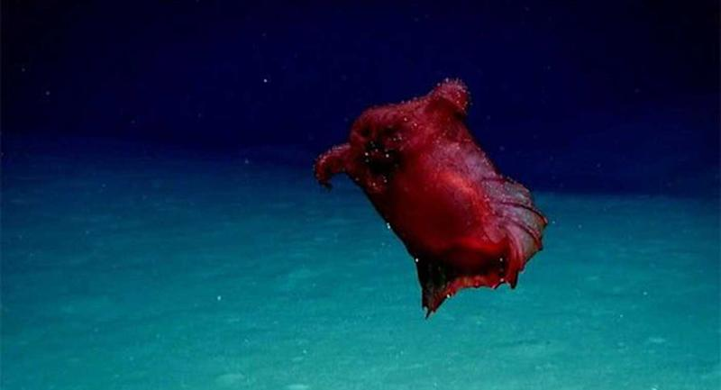 'Headless chicken monster' filmed in Southern Ocean for first time
