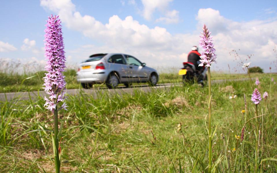Verges are a refuge for many wildflower species