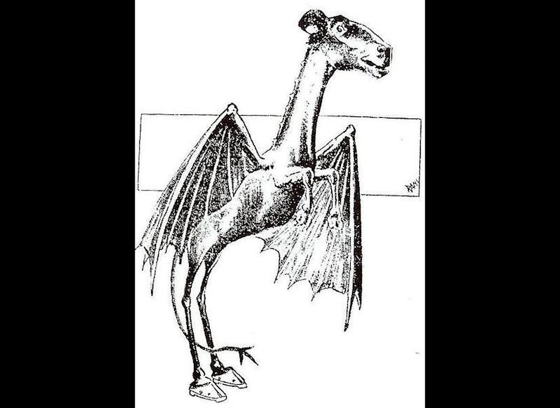An artist's rendition of the Jersey Devil, based on eyewitness reports of a creature said to roam the Pine Barrens area of New Jersey.