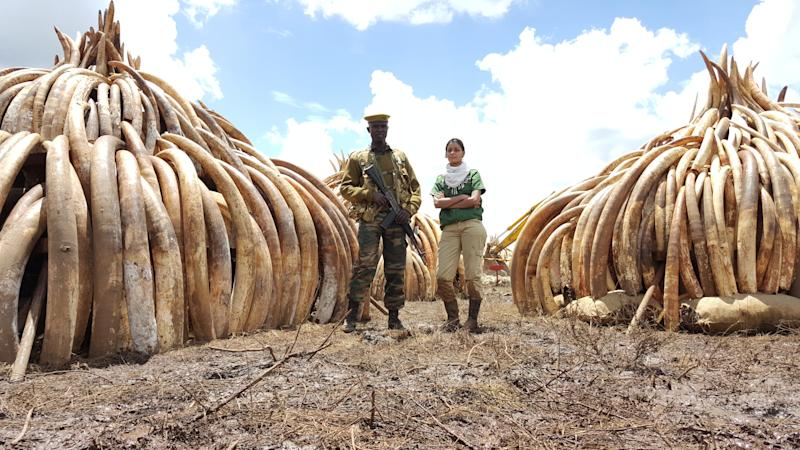 Raabia Hawa (R) anda ranger from the Kenya Wildlife Service (L) stand in front of elephant ivory and rhino horn inNairobi National Park, Kenya. The piles were later set alight in a demonstration against poaching.
