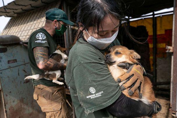 PHOTO: The HSI Animal Rescue Team rescues Baker at a dog meat farm in Haemi, South Korea, on Thursday, October 22, 2020.  (Jean Chung/For HSI)