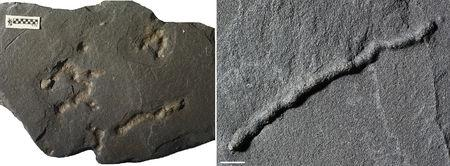 Tubular structures found in black shale from a quarry in Gabon dating from 2.1 billion years ago are shown in Poitiers, France in this undated handout photo