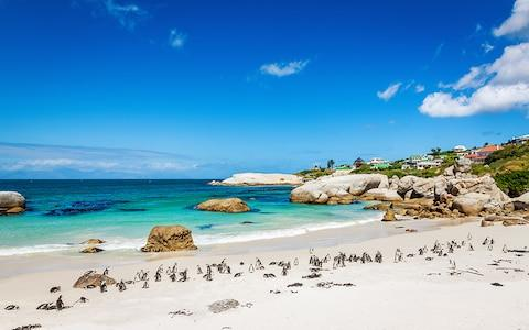 Boulders Beach - Credit: Mlenny Photography/Mlenny