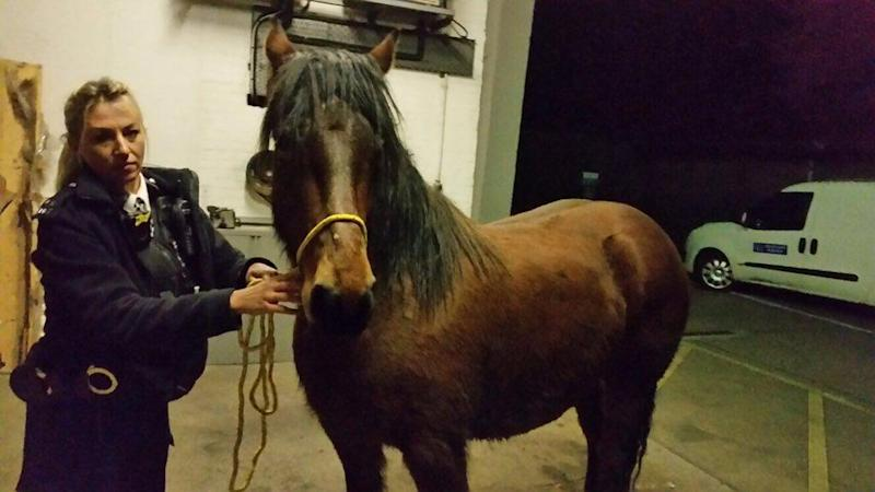 Horse rescue: PC Emma Hooper from Barnet, who happens to be an expert in horses (Met Police)