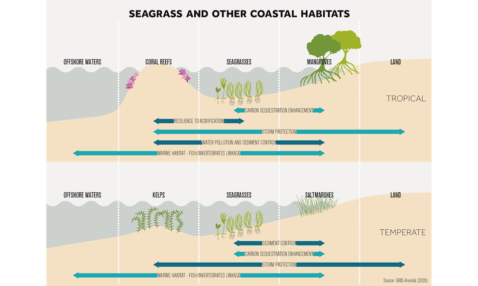 Graphic of seagrasses and other near-shore ecosystems.