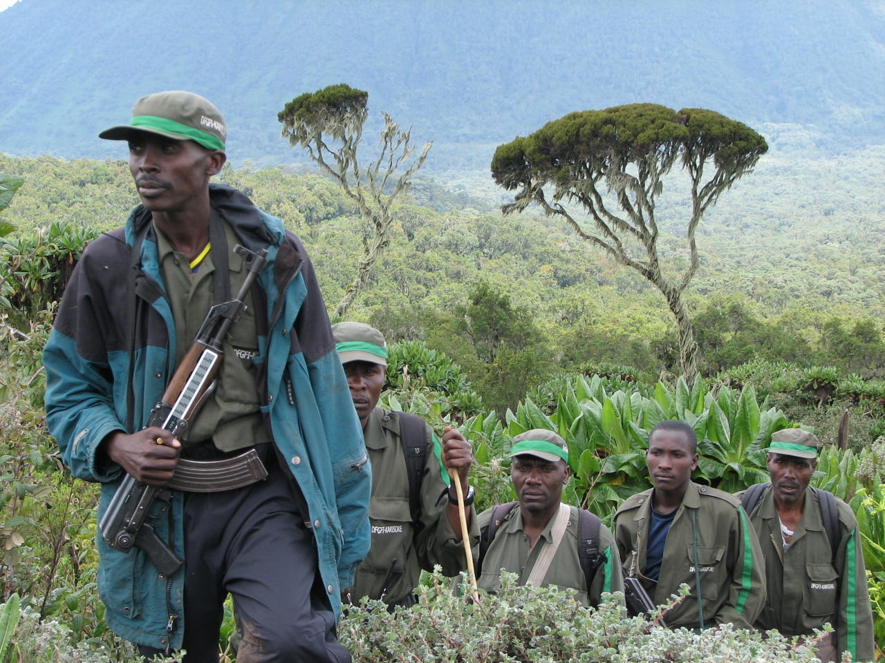 "This 2007 photo provided by the Dian Fossey Gorilla Fund shows members of an anti-poaching team in Rwanda's Volcanoes National Park. On Wednesday, Nov. 14, 2018, the International Union for Conservation of Nature updated the species' status from ""critically endangered"" to ""endangered."" The designation is more promising, but still precarious. (Dian Fossey Gorilla Fund via AP)"