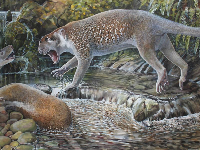 The new species of marsupial lion lived in Australia around 19 million years ago: Peter Schouten, Journal of Systematic Palaeontology