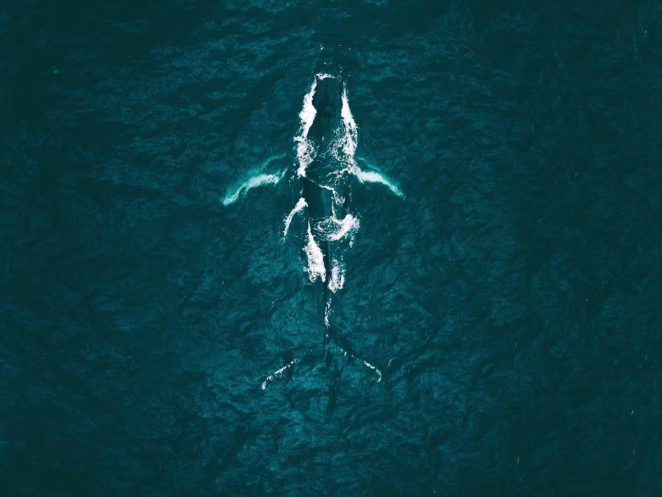 aerial view of whale