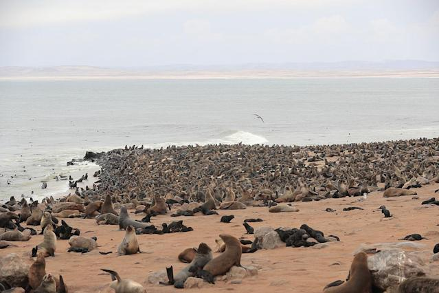 "<p>I stopped at Cape Cross, home of the largest colonies of Cape fur seals in the world. Its nickname is ""The Smelliest Place on Earth."" (Photo: Gordon Donovan/Yahoo News) </p>"