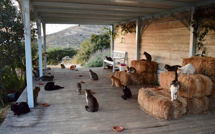 The cats live on a sanctuary in Syros, a Greek island in the Cyclades - Facebook
