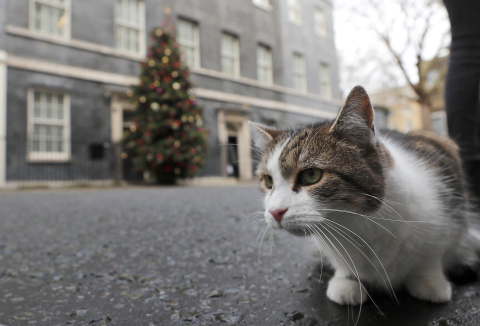FILE - In this Wednesday, Dec. 9, 2020 file photo, Larry the cat, Chief Mouser to the Cabinet Office at 10 Downing Street, sits in the street of Prime Minister Boris Johnson's official residence in London. Monday, Feb. 15, 2021 marks the 10th anniversary of rescue cat Larry becoming Chief Mouser to the Cabinet Office in a bid to deal with a rat problem at 10 Downing Street. (AP Photo/Frank Augstein, file)
