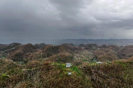 An aerial view shows trees and buildings damaged by Hurricane Maria in Puerto Rico, October 5, 2017. Picture taken October 5, 2017. REUTERS/Lucas Jackson
