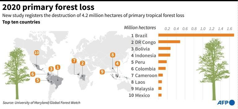 2020 primary forest loss