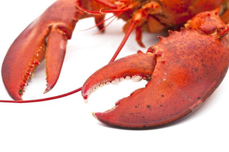 Massive Three Pound Lobster Claws Spotted at Costco