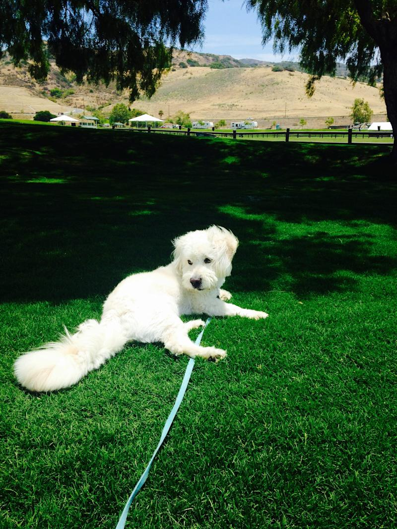 "Dougie the rescue pup loves California sunshine and teaching others how to do the ""Dougie."""